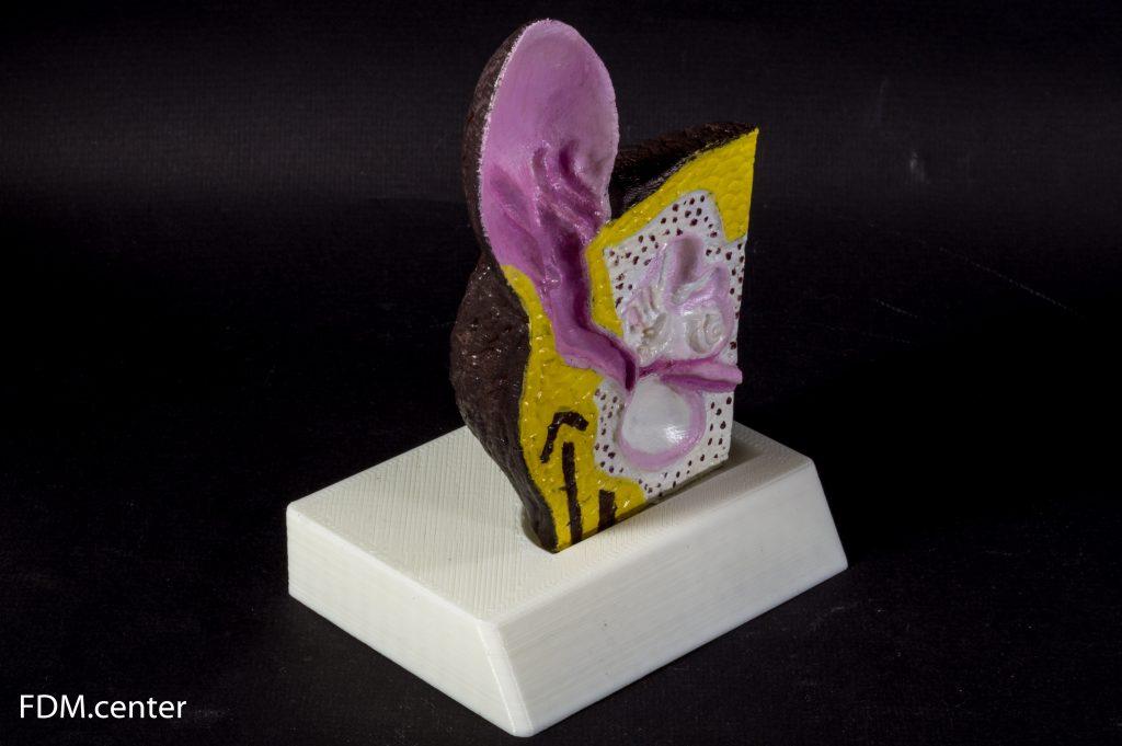 Анатомическая модель уха собаки 3d печать