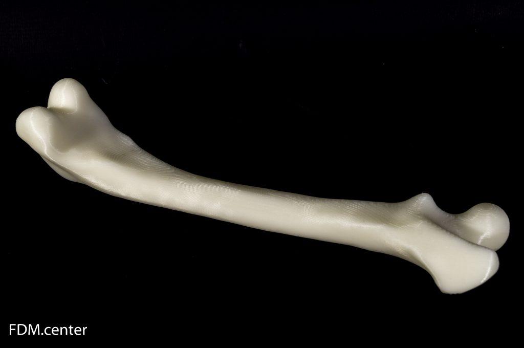 Бедренная кость собаки 3d печать