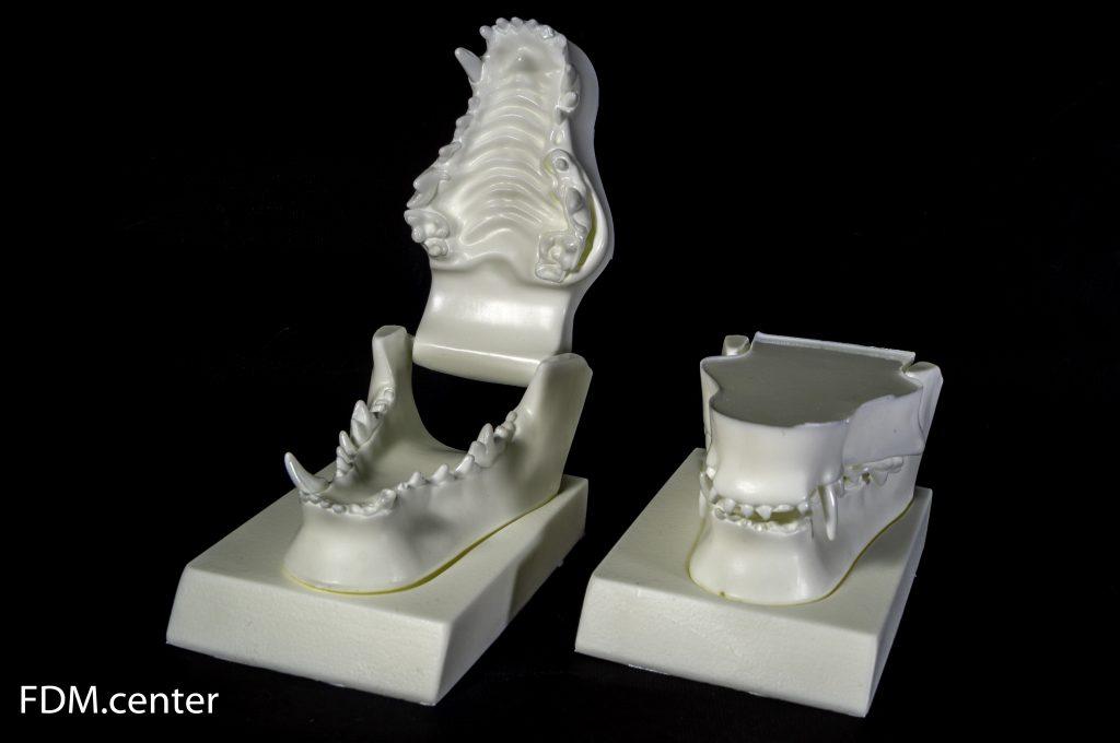 Анатомическая модель челюсть собаки литье